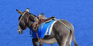 Les activités et excursions à Santorin