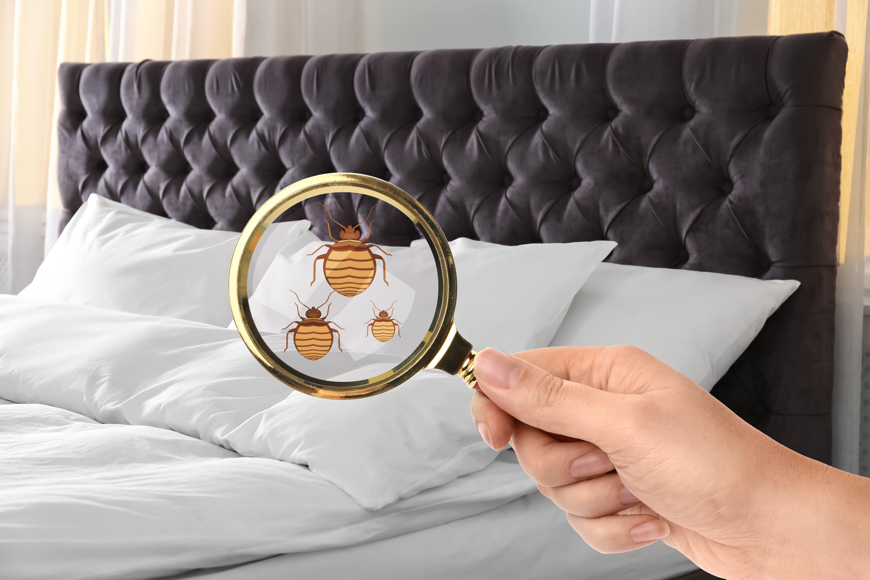 Qu'est-ce qui attire le plus les punaise de lit ?